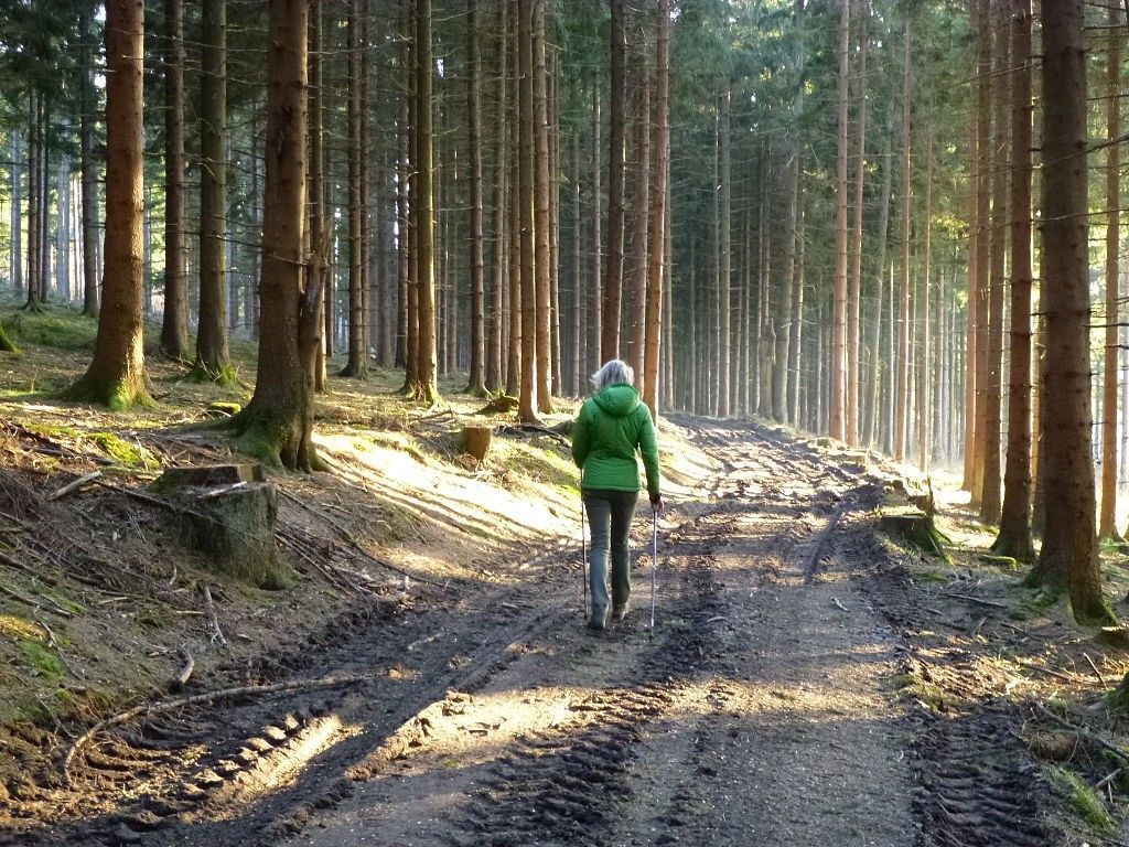 Nordic_Walking_im_Wald