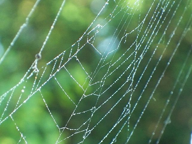 640px-100_7611spiderweb