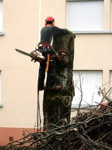 Lumberjacking: Still not an easy job. (Photo credit: Traumrune via Wikimedia Commons)