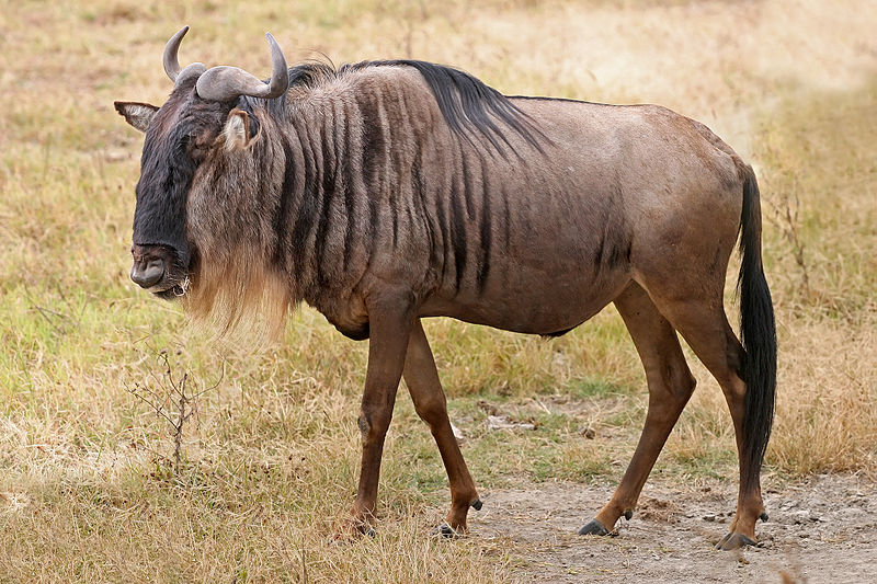 The only place where no gnus is not good gnus.