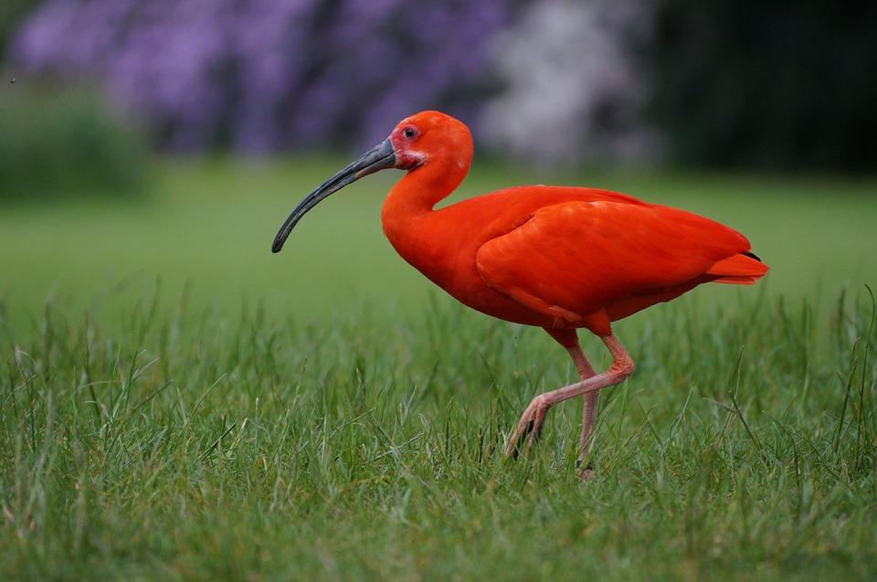 bird-park-walsrode-794302_960_720[1]